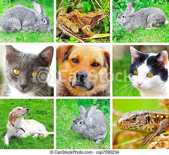 collage, de, animales, imágenes - csp7090234