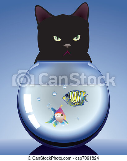 black cat and aquarium with fishes - csp7091824