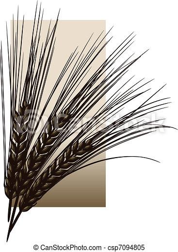 Barley - csp7094805
