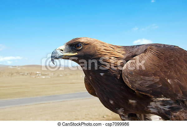 The bird of prey in the Mongolian d - csp7099986