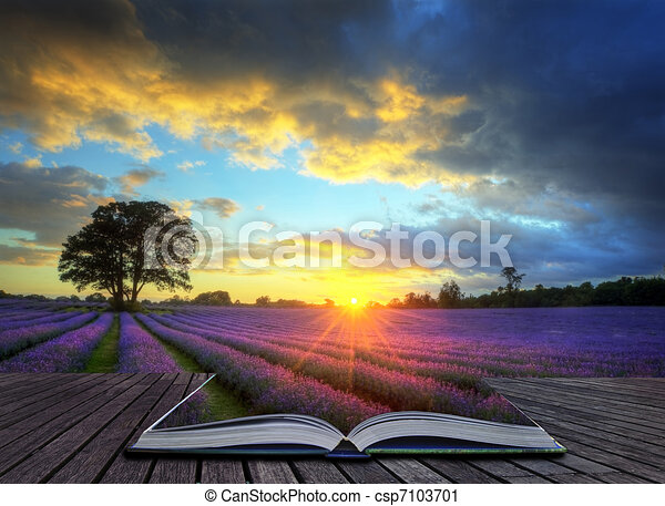 Creative concept image of beautiful image of stunning sunset with atmospheric clouds and sky over vibrant ripe lavender fields in English countryside landscape - csp7103701