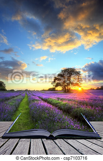 Creative concept image of beautiful image of stunning sunset with atmospheric clouds and sky over vibrant ripe lavender fields in English countryside landscape - csp7103716