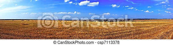 Field of ripe wheat - csp7113378