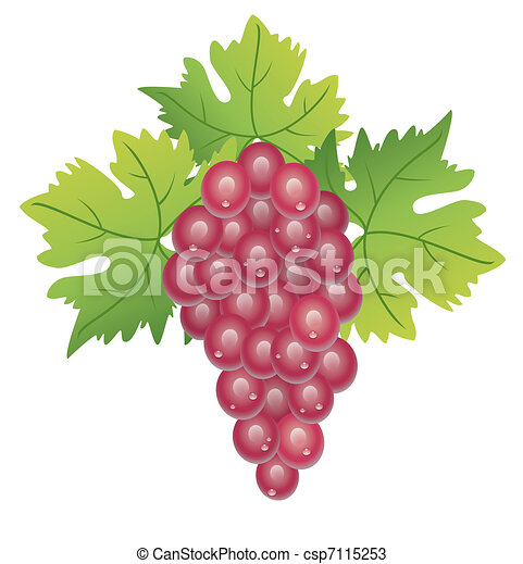 grape cluster - csp7115253