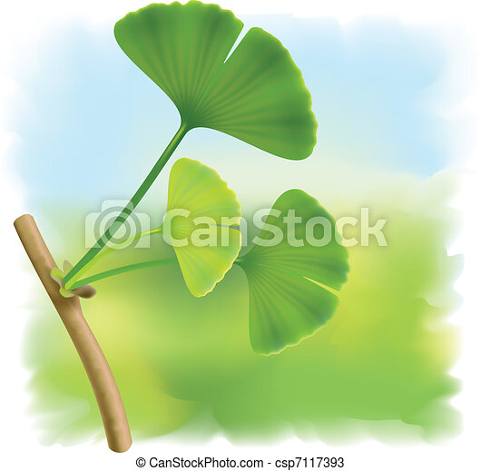 Twig with leaves of ginkgo biloba. - csp7117393