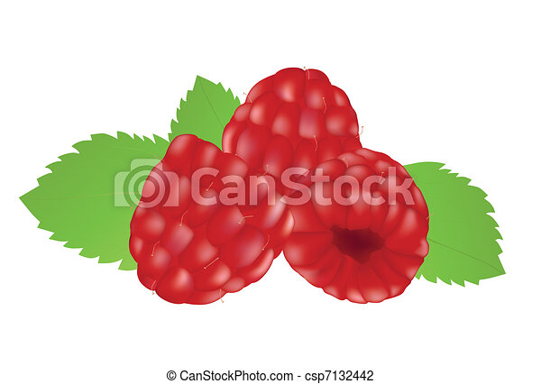 Raspberries on the white background - csp7132442