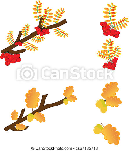 Illustration  leaves oak,  rowan-berry - csp7135713