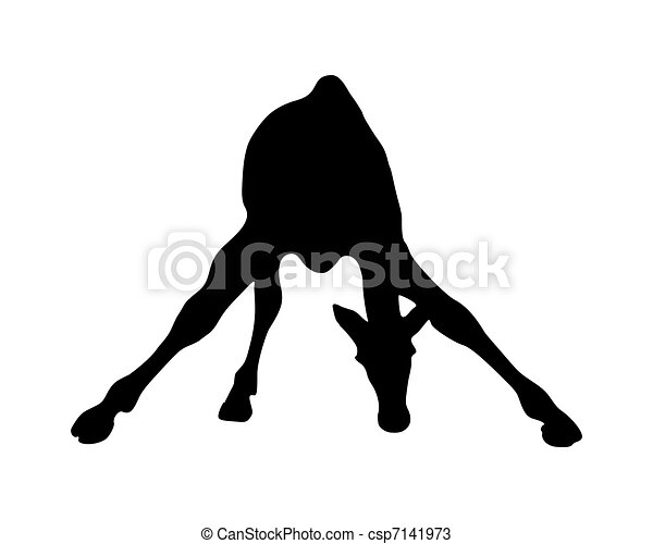 Detailed and isolated illustration of the mammal giraffe - csp7141973