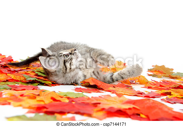 Cute tabby kitten in colorful leaves - csp7144171