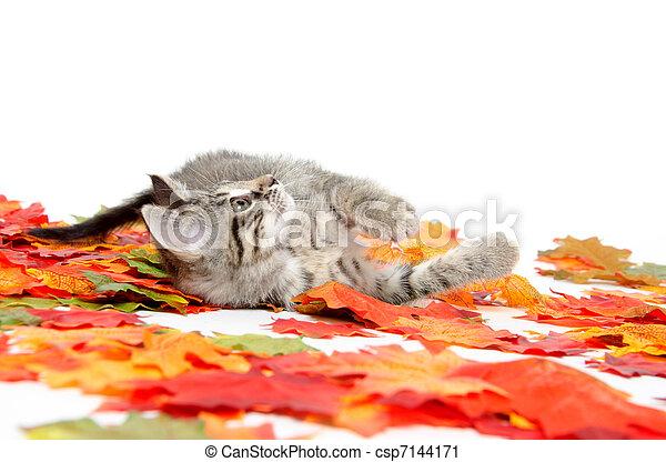 Cute tabby kitten in colorful leaves - csp7144171