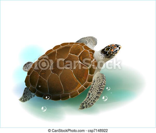 sea turtle swimming in the ocean - csp7148922