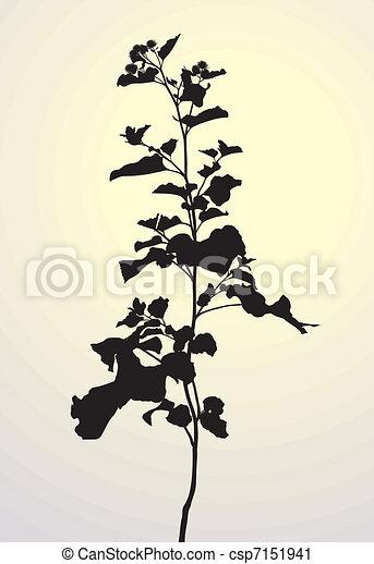 Plant-Arctium lappa  - csp7151941