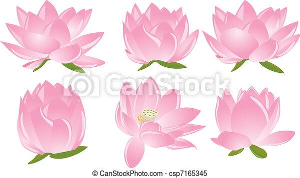 illustration of lotus(waterlily) - csp7165345