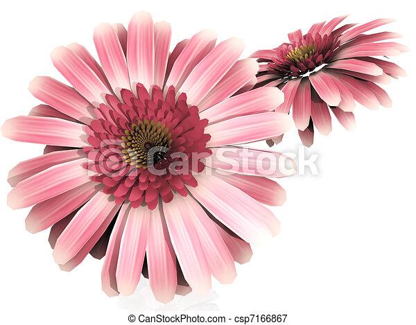 Stock Illustrations Of Gerbera Daisy