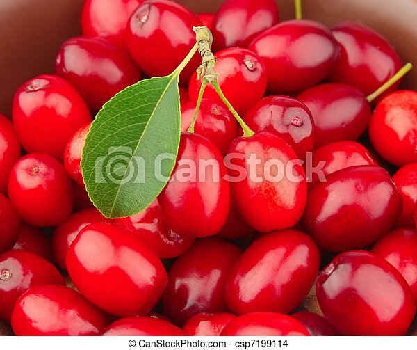 sweet dogberry close up - csp7199114