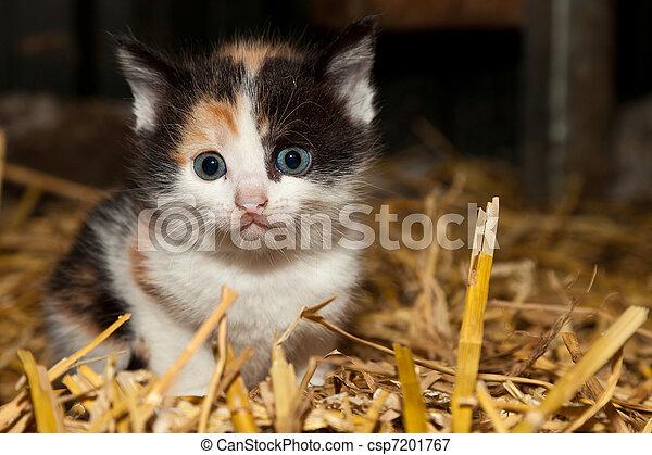 Small innocent kitten - csp7201767