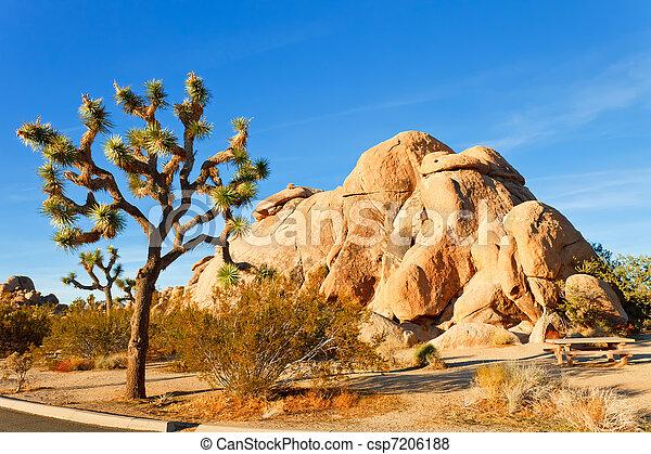 Joshua Tree National Park, Mojave Desert, California - csp7206188