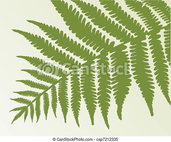 Single fern frond. isolate object - csp7212335