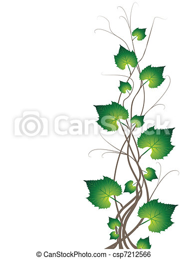 Grapevine Branches - csp7212566