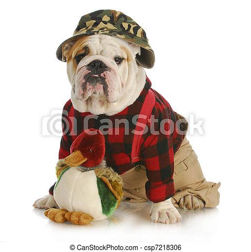 hunting dog - csp7218306