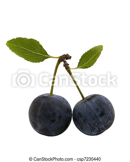 berries of sloes with leaves - csp7230440