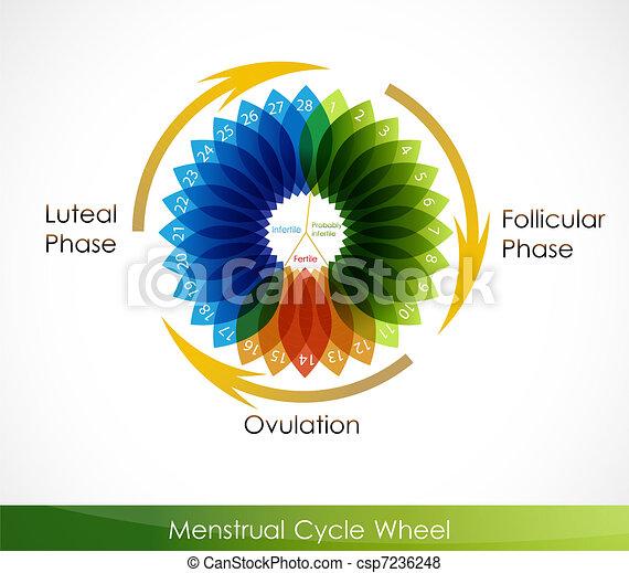 Menstrual cycle calendar - csp7236248