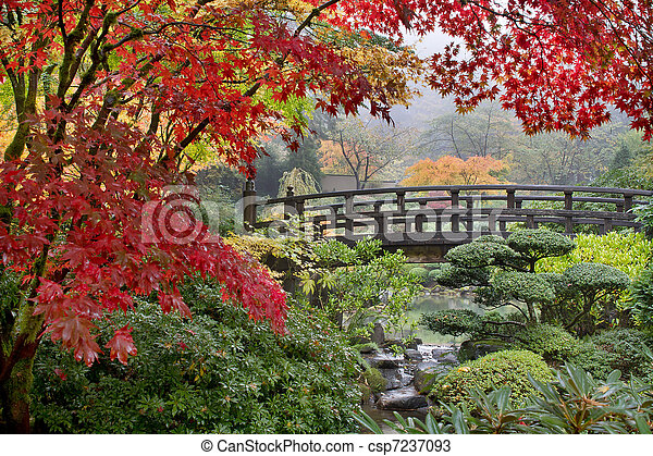 Japanese Maple Trees by the Bridge in Fall - csp7237093