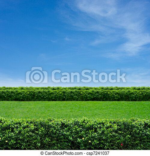 Grass and cloudy sky - csp7241037