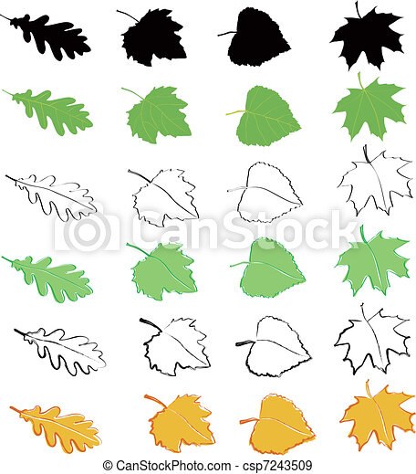 Oak, birch, poplar and maple leaves - csp7243509
