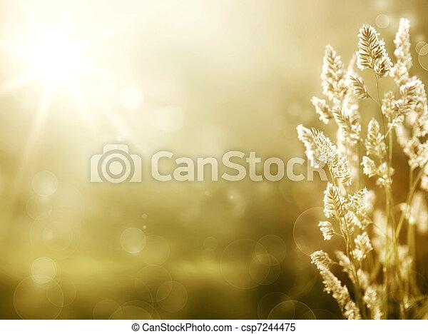 夏天, 藝術, 草地, 日出, 背景 - csp7244475