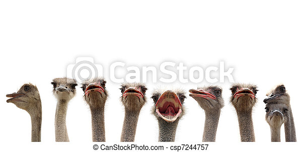 funny birds - csp7244757