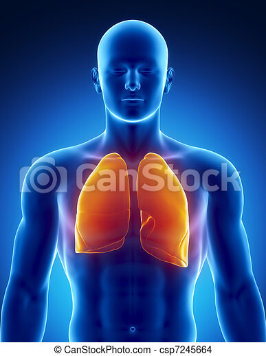 Human respiratory system with lungs - csp7245664