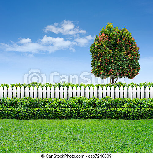 white fence and hedge with tree on blue sky - csp7246609