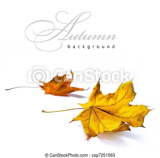 otoño, Extracto, fondos - csp7251563
