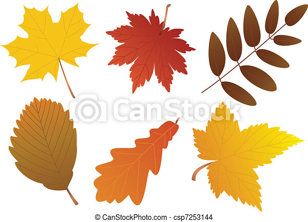 Autumn Leaves Drawings Vector Autumn Leaves