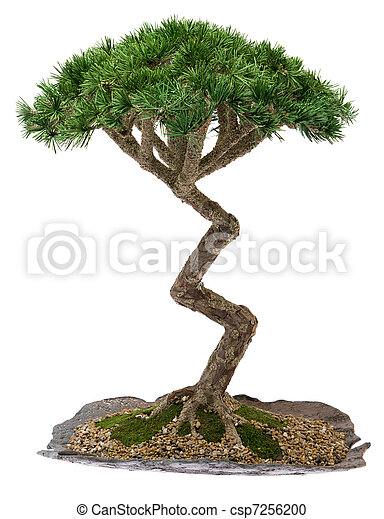 stock fotografie von bonsai baum a klein bonsai baum. Black Bedroom Furniture Sets. Home Design Ideas