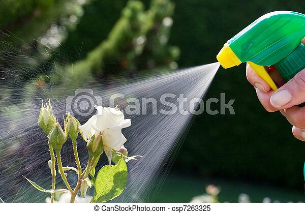 Pest control. Roses in the garden - csp7263325