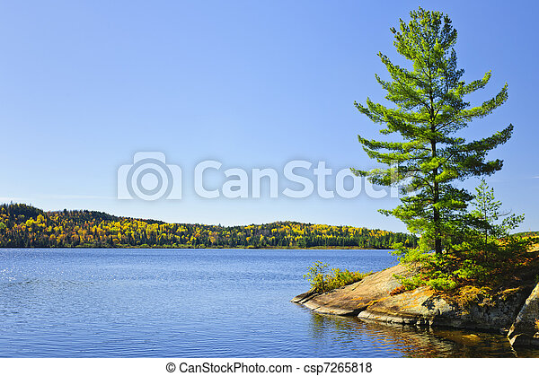 Pine tree at lake shore - csp7265818