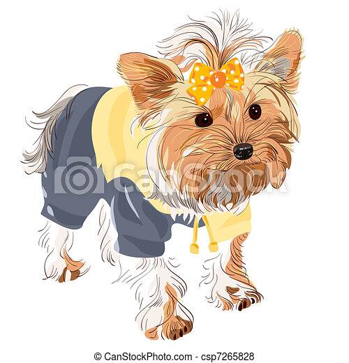 vector pedigreed dog Yorkshire terrier - csp7265828