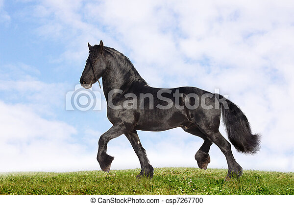 black stallion - csp7267700