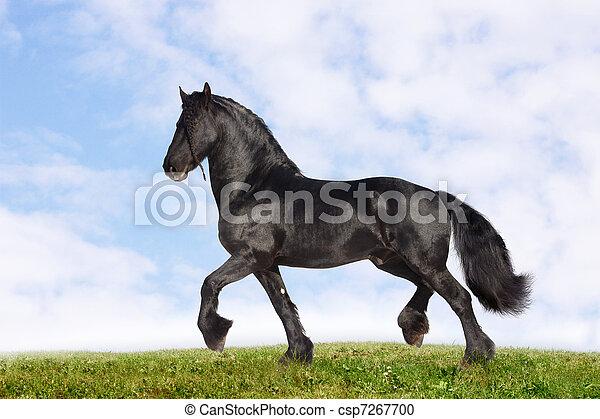 black stallion - csp7267700