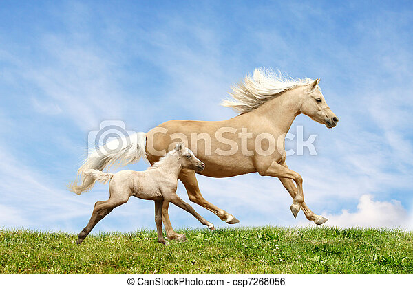 welsh pony mare and foal - csp7268056