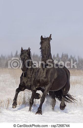 black horses - csp7268744