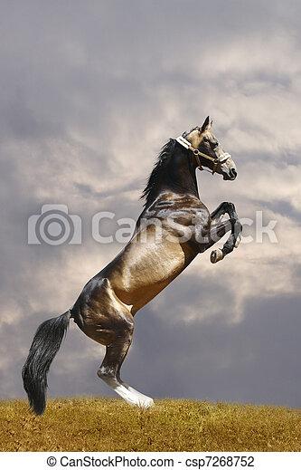 horse rears - csp7268752