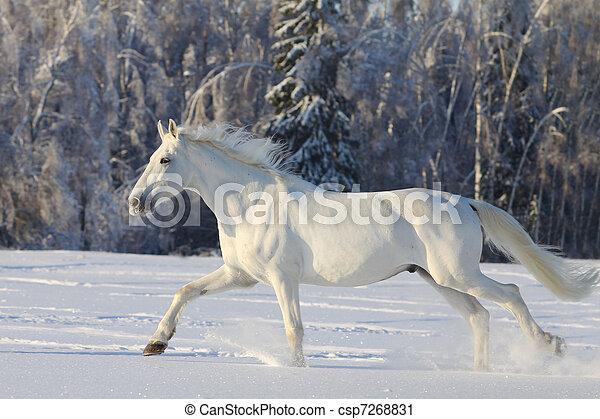 white horse - csp7268831