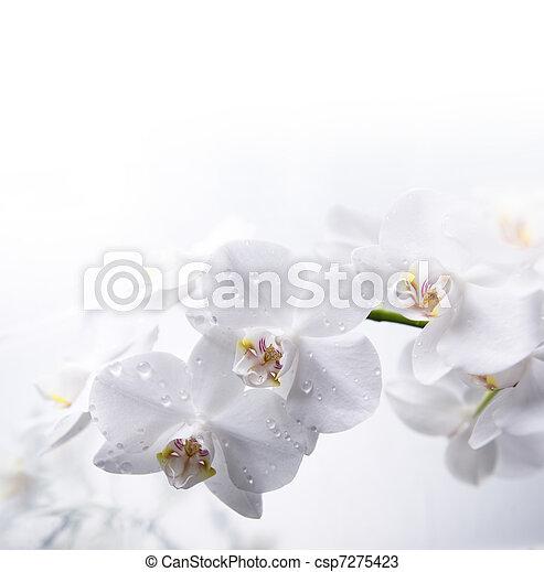 Archivi fotografici di acqua bianco orchidea bianco for Orchidea acqua
