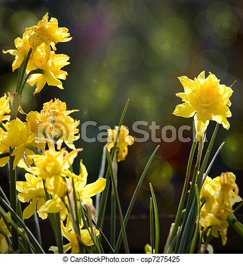 images de beau art printemps fond sauvage fleurs nartsizy csp7275425 recherchez des. Black Bedroom Furniture Sets. Home Design Ideas