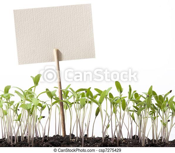 paradicsom, mutató, művészet, osztály,  Seedlings - csp7275429