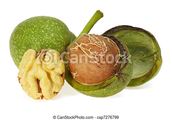 Green walnut, peeled and fresh kernel - csp7276799