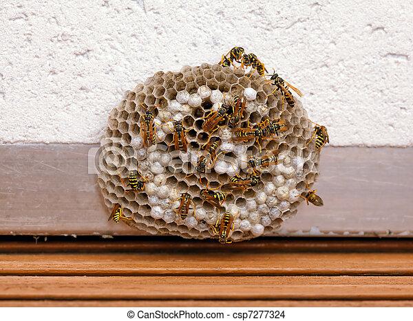 stock foto von wespe nest wespe nest wespen arbeitende csp7277324 suchen sie. Black Bedroom Furniture Sets. Home Design Ideas